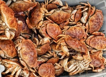 Crabs_2043_4_lr